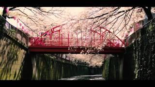 【Sakura@skyestate】 もう桜の季節は終わってしまいましたが、今年の目...