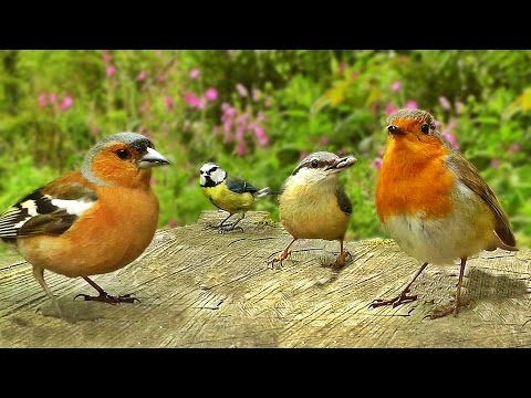 Movie for Cats - Birds Chirping on A Beautiful Day