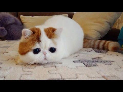 Recopilaciones de Gatos - Gatos vagos y gatos juguetones