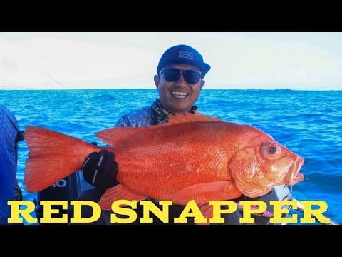 STRIKE KAKAP MERAH !! #jigging #bima #fishinglife