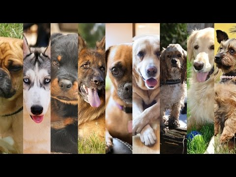 Top 23 Friendliest Dog Breeds | The Facts About Dog Breeds