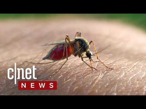 Science To Pit Mosquitos Against Mosquitos (CNET News)