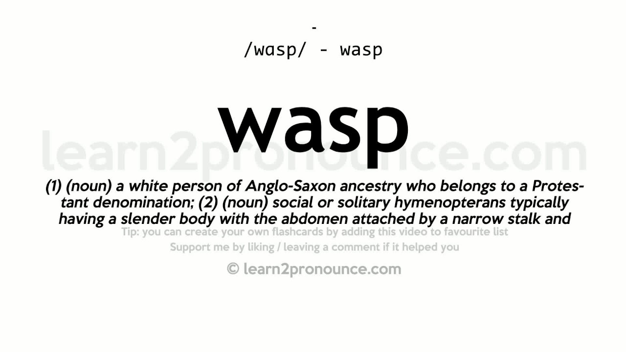 Wasp Pronunciation And Definition