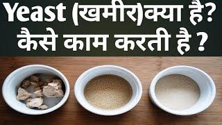खमीर(Yeast )क्या है?क्या काम करती है?How Yeast  Work in Baking