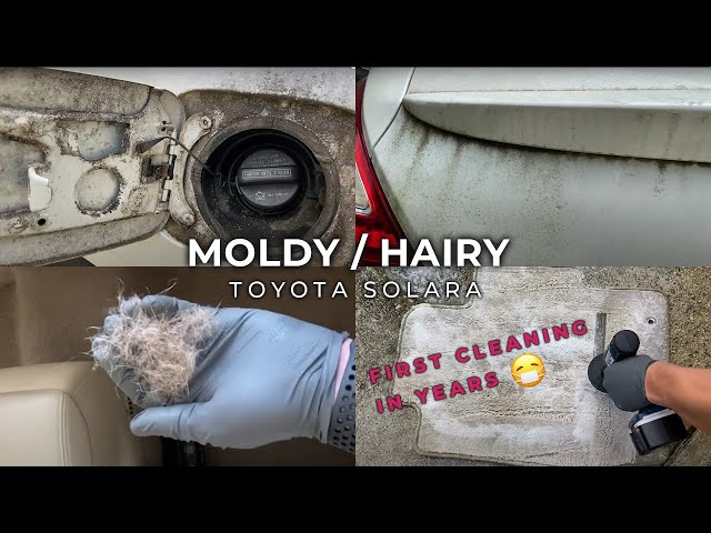 MOLDY Car Detail | DISASTER Car Cleaning