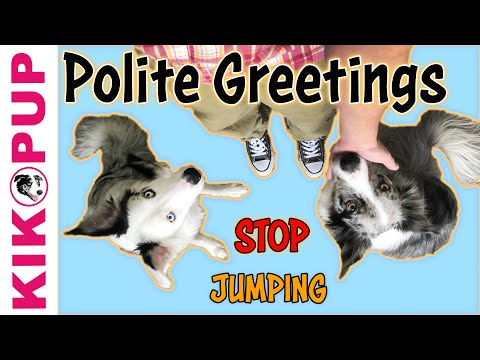 Polite Greetings - STOP Jumping