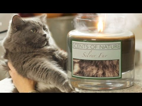 This New Cat Inspired Candle Scent Will Leave You Speechless