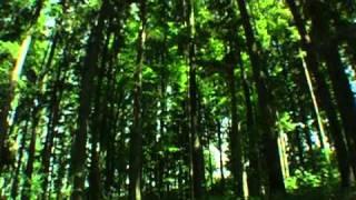 Звуки природы. Живой лес(Живой лес., 2012-01-30T18:05:55.000Z)