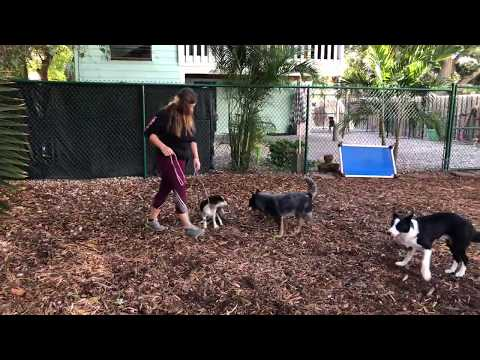 Lexi | Cavalier King Charles | Learning Obedience