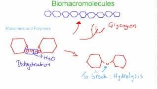 Biomacromolecules: Monomers and Polymers