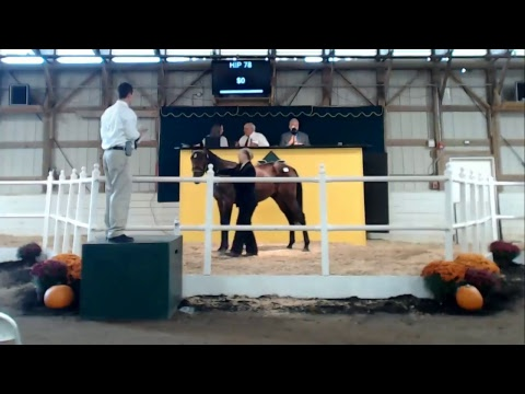2017 Morrisville State College Yearling Sale