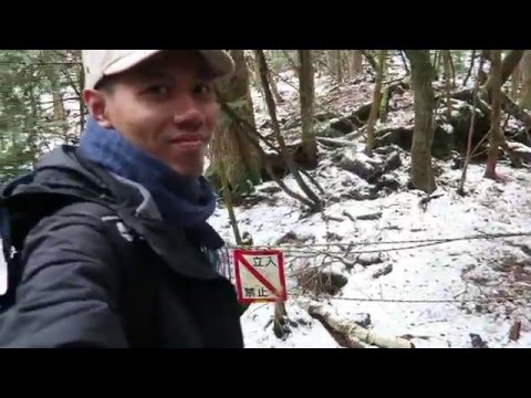 """Entering the """"No Entry"""" Trail of the Aokigahara Forest (Suicide Forest)"""