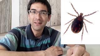 Pri insektoj kaj iksodoj | Esperanto vlogo
