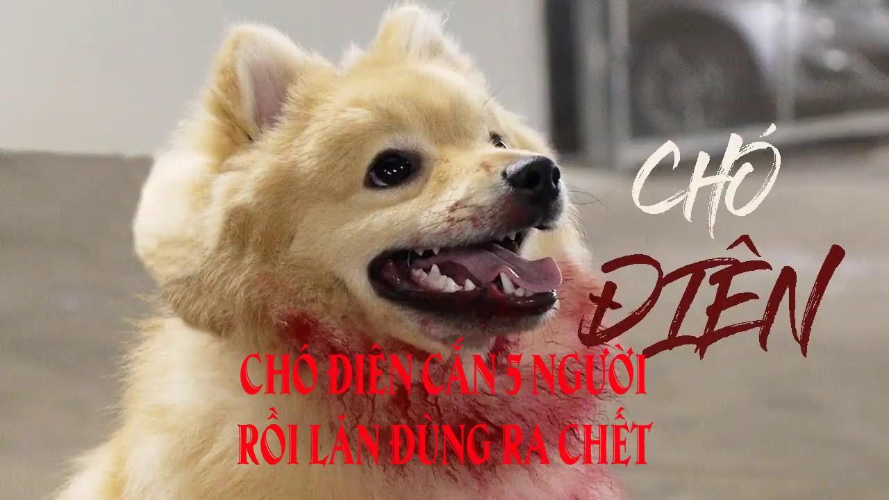 Chó điên cắn 5 người rồi lăn đùng ra chết
