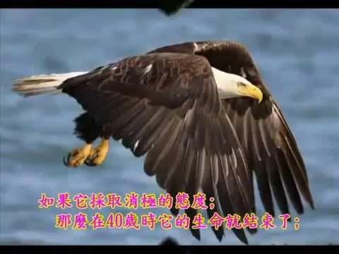 老鷹之歌 p2 中英文字幕
