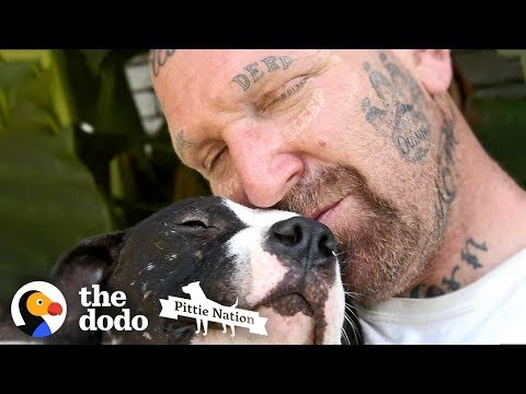 Guy Fills His Home With Pitties No One Wants  | The Dodo Pittie Nation