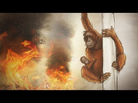 Why palm oil kills orangutans – an animated short story