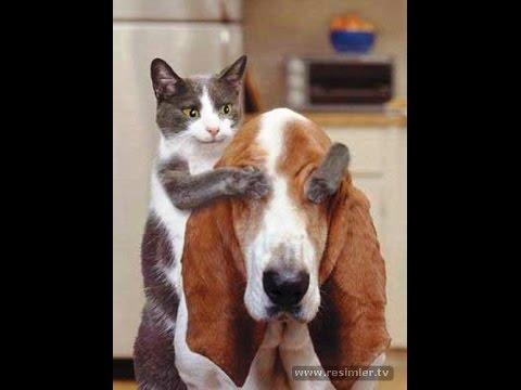 قط يجنن كلب - funy cat - çok komik kedi