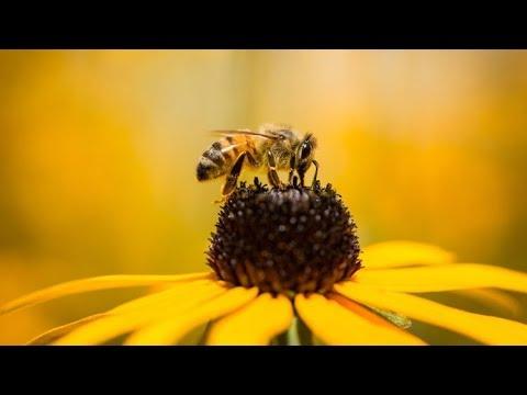 Agrimagnews | Al Bando In Francia I 5 Pesticidi Ritenuti Responsabili Della Morte Delle Api