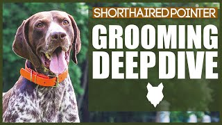 How To Groom Your GERMAN SHORTHAIRED POINTER
