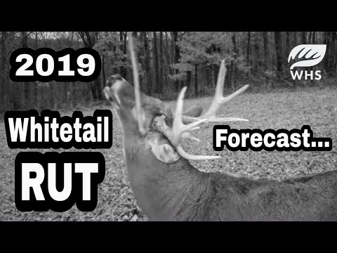 2019 Whitetail Rut Forecast And Tools Of The Rut