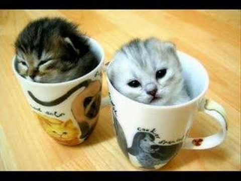 Cute Catz