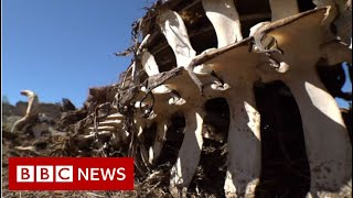 South African drought town's warning to the world - BBC News