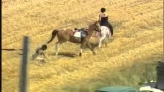 Tour de France 2003 horse crash