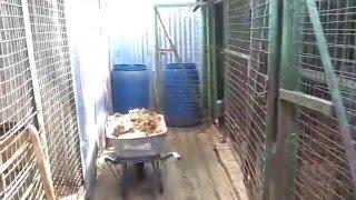 Как выглядит Московский приют «ЭКО Вешняки» после спасения выживших животных