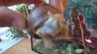 my snails Gamabunta and rune