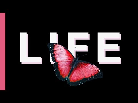 This Video Will Change Your Life Forever *Butterfly Effect*
