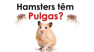 Hamsters têm pulga?