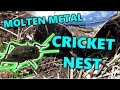 Molten Metal Casting: Crickets Nest + Rare Coral Fungus/Mushrooms!