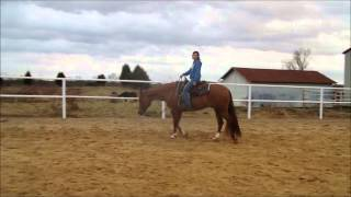 -SOLD-My Chocolate Mambo- For Sale 9 yr old AQHA gelding