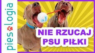 Nie rzucaj psu piłki