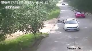 Download Hindi Video Songs - 🐅 TRAGEDY 🐅 Tiger attacks and kills woman at safari park in China 😔