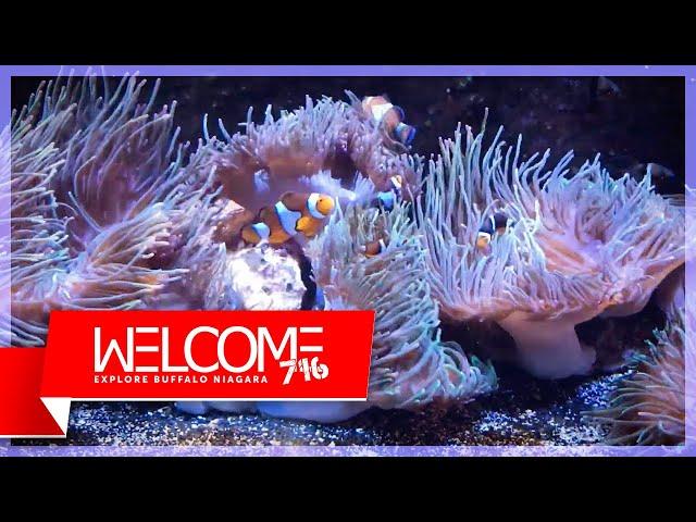 Welcome 716 visits Aquarium of Niagara - Explore Buffalo Niagara