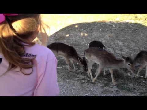 Fossil Rim Wildlife Center - Vary Family Safari 2012