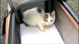 大雨災害で母親を亡くした子猫を保護した結果…