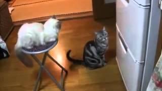 Смотреть онлайн бесплатно коты приколы