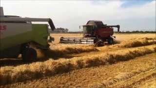 Harvesting New Zealand