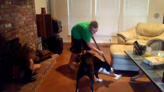 Dog vs Vacuum (The Charlie Series)