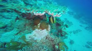 SCUBA DIVING IN EILAL 13-14/12/2018 - 3