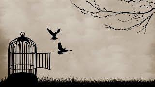 Wie mehr Freiheit zu Unfreiheit führt [Oliver Janich, Vulgäre Analyse, Doktorant, Charles Krüger]