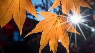 Золотая осень. Красочные виды осеннего леса. Лучшая музыка для души.
