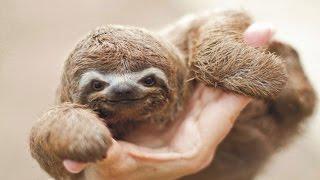 25 ANIMALES BEBÉS SUPER TIERNOS | ANIMALES RECIÉN NACIDOS