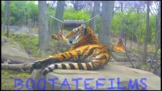 New York Presenta El Zoológico del Bronx - Animales Hermosos Del Mundo