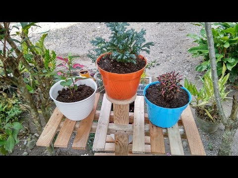How To Display Outdoor Plants Using Wood Plant Stand | Summer Garden Project
