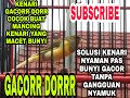 Pancingan Kenari Macet Bunyi Agar Gacor Tanpa Jeda  Mp3 - Mp4 Download