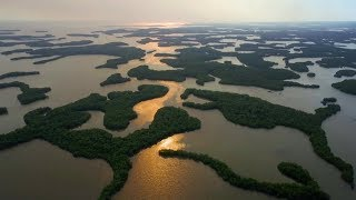 Everything Always Now: Ten Thousand Islands, Florida